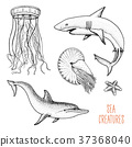 Fishes or sea creature dolphin and white shark 37368040