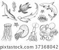 vector, set, fish 37368042