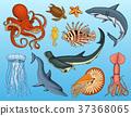 fish, set, nautilus 37368065