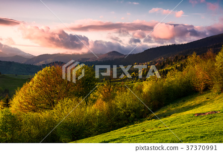 forested hill at cloudy sunset in springtime 37370991