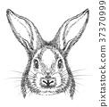 bunny, vector, animal 37370999