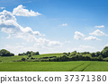 Green fields in rural environment in the spring 37371380