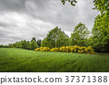 Cloudy weather over a rural field with broom 37371388