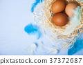 egg, nest, easter 37372687