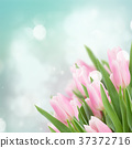 close up of pink tulips 37372716