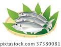 ปลาทู 37380081
