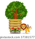 lion in front of an empty wooden signboard 37381577