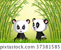 two cute panda in a bamboo forest 37381585