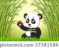 two cute panda in a bamboo forest 37381586