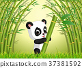 동물, 벡터, 팬더 37381592