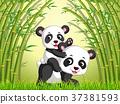 벡터, 숲, 팬더 37381593