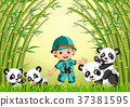 two cute panda in a bamboo forest 37381595