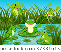 many frogs on leaf with river scene 37381615