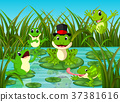 many frogs on leaf with river scene 37381616