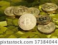 金币 钱 钱币 37384044