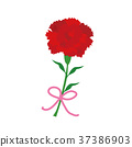 mothers day, mother's day, carnation 37386903