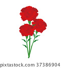 mothers day, mother's day, carnation 37386904