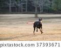 개, 강아지, 뒤쫓아가다 37393671