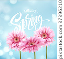 Gerbera Flower Background and Hello Spring 37396210