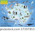 Antarctic, Antarctica,  flora and fauna map 37397853