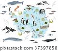 Antarctic, Antarctica,  flora and fauna map 37397858
