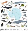Antarctic, Antarctica,  flora and fauna map 37397868