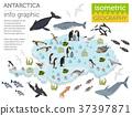 Antarctic, Antarctica,  flora and fauna map 37397871