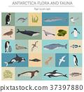 Antarctic, Antarctica,  flora and fauna map 37397880