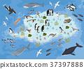 Isometric 3d Antarctica flora and fauna map  37397888