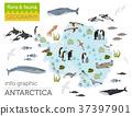 Antarctic, Antarctica,  flora and fauna map 37397901