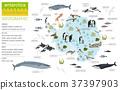 Antarctic, Antarctica,  flora and fauna map 37397903