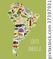 South, America, animal 37397931