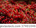 Close-up of a bright red currant. The heap of 37401046
