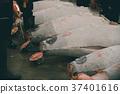 fish market 37401616