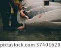 fish market 37401629