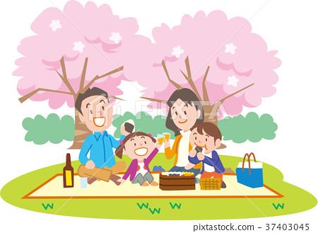 cherry-blossom viewing, cherry blossom, family 37403045