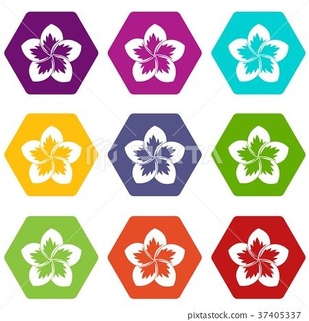 Frangipani flower icon set color hexahedron 37405337