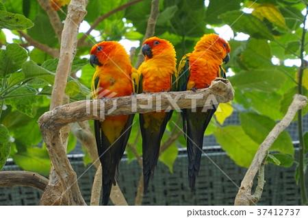 鸚鵡排隊 37412737