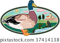 oval frame with landscape, and wild duck. 37414138