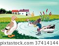 Ducks in a pond near a farm. 37414144