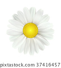 Spring daisy flowers isolated on white background 37416457