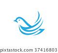 dove, bird, vector 37416803