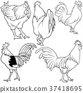Rooster Collection 37418695