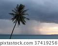리조트, 바다, 야자 37419256