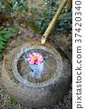 鹿威 水 花朵 37420340