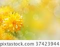 Yellow flowers 37423944