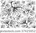 Hand Drawn of Arame Seaweed on White Background 37425652