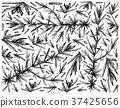 Hand Drawn of Hijiki Seaweed on White Background 37425656