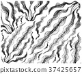 Hand Drawn of Kombu Seaweed on White Background 37425657