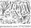 Hand Drawn of Sea Vegetables or Seaweed Background 37425664